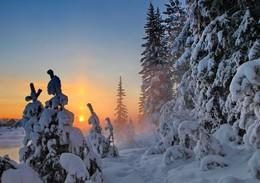 Три солнца... / Однажды, в студеную зимнюю пору Я из лесу вышел; был сильный мороз. (Иркутская область Казачинско-Ленский район)