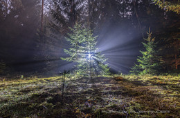 Свет / Контровой в тумане. Налибокская пуща.  d7100 + Tokina 116 AT-X pro Штатив + налобный фонарь.