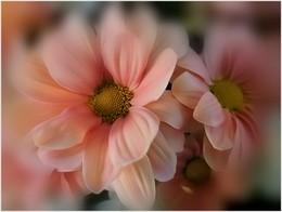 Нежность / люблю цветы...