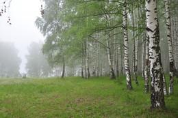 Туманное утро. / Туманное утро на опушке леса.