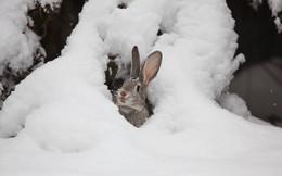 фотоохота / заяц