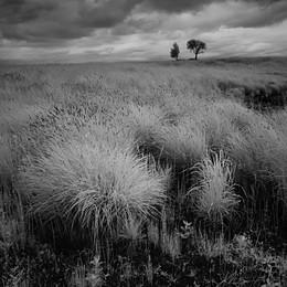 Деревья с травой ночью у Присек в июне 2015 / Деревья с травой ночью у Присек в июне 2015