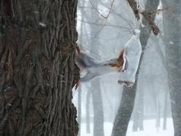 / зима, парк, белка
