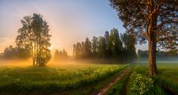 Скоро весенне-летние прогулки по дорожкам в парках. / Санкт-Петербург. Парк Павловск.