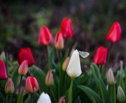 Про бабочку в нашем саду / Про бабочку в нашем саду