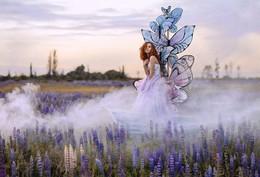 Butterflies / ***