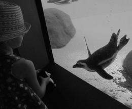 Сквозь стекло / девочка знакомит живого и игрушечного пингвинов