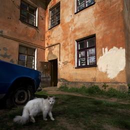Кошка белая у автомобиля в Озерках летом 2008 примерно / Кошка белая у автомобиля в Озерках летом 2008 примерно