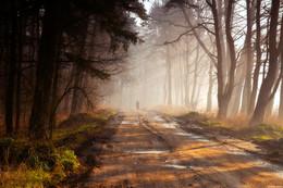 На пути / Захотелось поснимать туманным утром, по пути встретил женщину идущую из поселка за водой