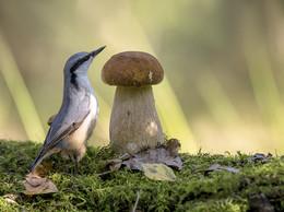 В стране больших грибов. / .....