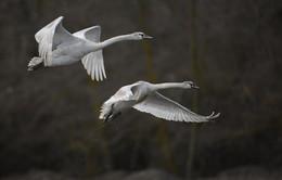 """""""Белые крылья..."""" / работа в Дагестане"""