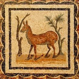 Думы о квадрате / Музей Бардо – музей мозаики в Тунисе