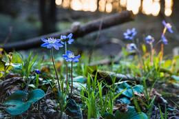 Весеннее настроение / Весеннее настроение ) банально но не смог удержатся весна, тихий, тёплый вечер