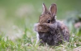 сосед / кролик