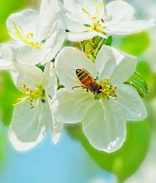 весна пришла / май, весна, правда, позндняя