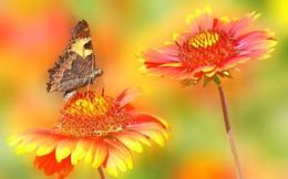 На клумбе / лето, порхают бабочки, деревня