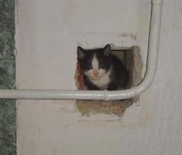 Элементарная частица / Кошка - это элементарная частица домашнего тепла и уюта!