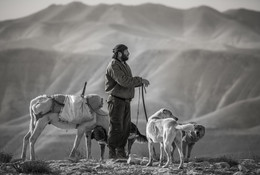 Трудовые будни / Пастух бедуин. 2017г.