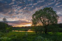 Пойма Вилии на закате / Пойменный луг Вилии в Островецком районе, Беларусь.