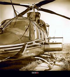"""Оса / Wasp / / Снимок 2003 года. Камера Rolleiflex (1943) трофейная, пленка Свема F250 (6х6см). Проявитель D-76 (2x раств.). Ручная печать, фотоувеличитель\""""Азов\"""""""