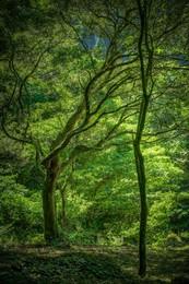 японская природа / Kagoshima.Japan