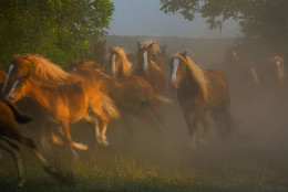 Мечты / Лошади