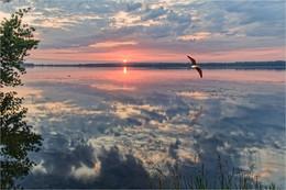 Рассвет над Днепром / И первая чайка в кадре...