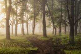 Без названия / Утро в лесу
