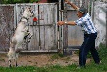 Неравный бой! / Дедушка и коза Мира