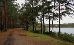 Прогулка в сосновом бору / Сосновый бор, дождливая погода, безветренно, приятная прогулка.