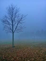 Там за туманами / туманное утро