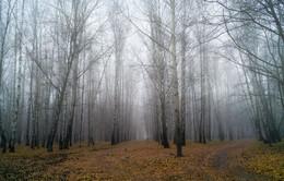 Ноябрьский туман / Прогулка в парке в ноябре