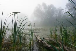 Там за туманами / Туман на лесном озере.