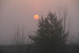 Там за туманами / Просто летнее утро, дорога...Снимок случайный.