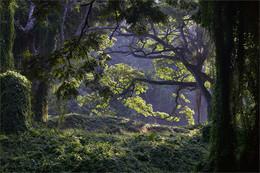 Утро в тропическом лесу / Парк Альмендарез. Гавана