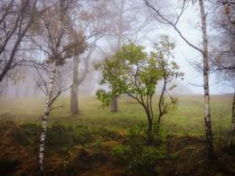 / осенний туман (Болгария, гора Стара-планина)