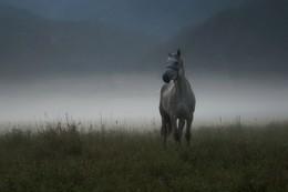 По туману. / Раннее туманное утро.