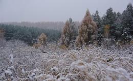 Пасмурный день. / Пасмурный день, первый снег.