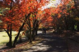 Осень / sony a6000 Japan .Kagoshima
