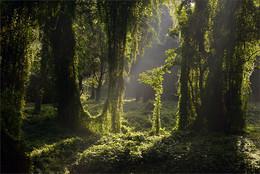 Зеленый мир / Парк Альмендарез. Гавана