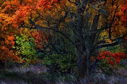 """""""Огненный лес"""" / Последние краски осени"""
