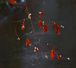 Последние листья осени / Приметы осени