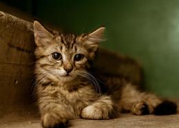 Кот, живущий в подъезде / Один снимок из серии про бездомного кота из моего подъезда.