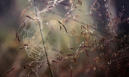 ..паутинки лета.. / ...