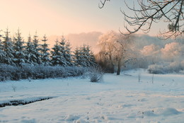 первій снег / сиховский лесопарк