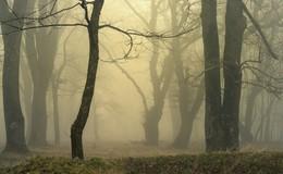 Туман / Утро в дубовой роще