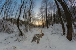 Зимняя тропа / ***