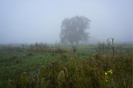 Туманное утро. / Туман в поле.