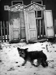 """Не первый снег / """"Бездомный"""""""