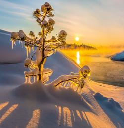 Творчество Ладоги / Ледяные скульптуры на ветвях. Маленькие сосны на фоне рассветного золота.  Карелия. Ладожское озеро. 23 января, 2018 год.  Приглашаю на фототур «Зимняя Ладога».